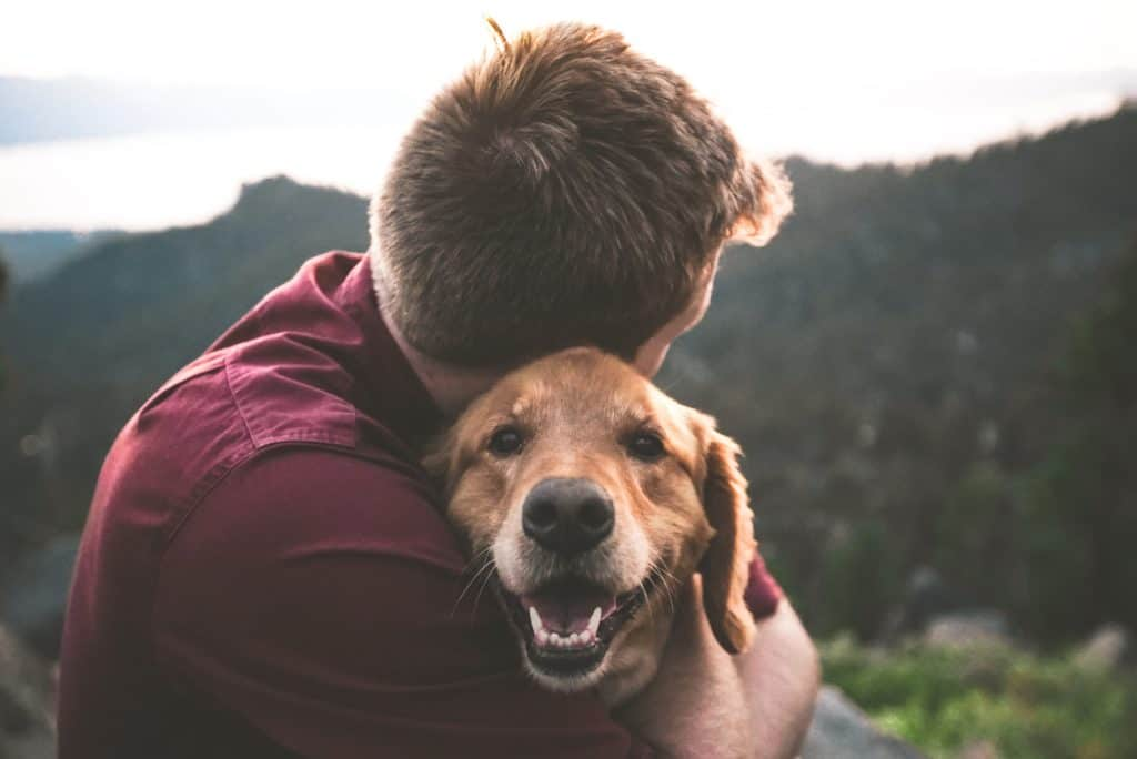 Positive and Supportive Relationships in Mental Health - dog
